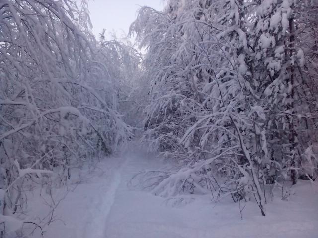 Не Аляска,но! IMG_20150105_112820