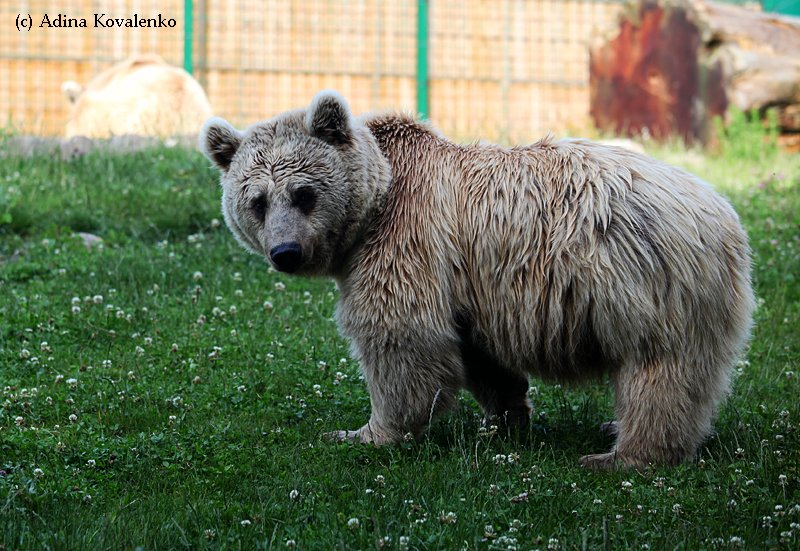 Швейцарский зоопарк 7b2fb4fb8973