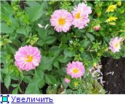 Георгины в цвету - Страница 2 67db13ab54e5t
