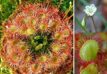 продам семена экзотических растений A5255fc447d5
