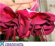 ФУКСИИ В ХАБАРОВСКЕ  - Страница 3 77b02d702f7dt