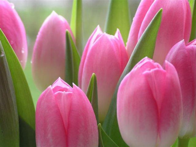 Поздравляем Всех с Международным Женским Днем 8 Марта!!! 33eb342354dd