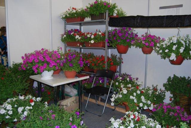 Международная выставка цветов AstanaFlorExpo - 2011 2761b41da7bd