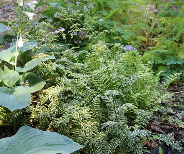 Экскурсия по Ботаническому Саду D22b4160843d