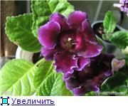 Семена глоксиний и стрептокарпусов почтой - Страница 2 A9bb0bc9c74at