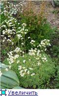 Растения для альпийской горки. 8fca41d871d8t