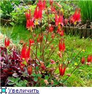Растения для альпийской горки. - Страница 2 Be63fb10a8d2t