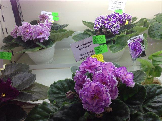 Выставка цветов 88214e22576a