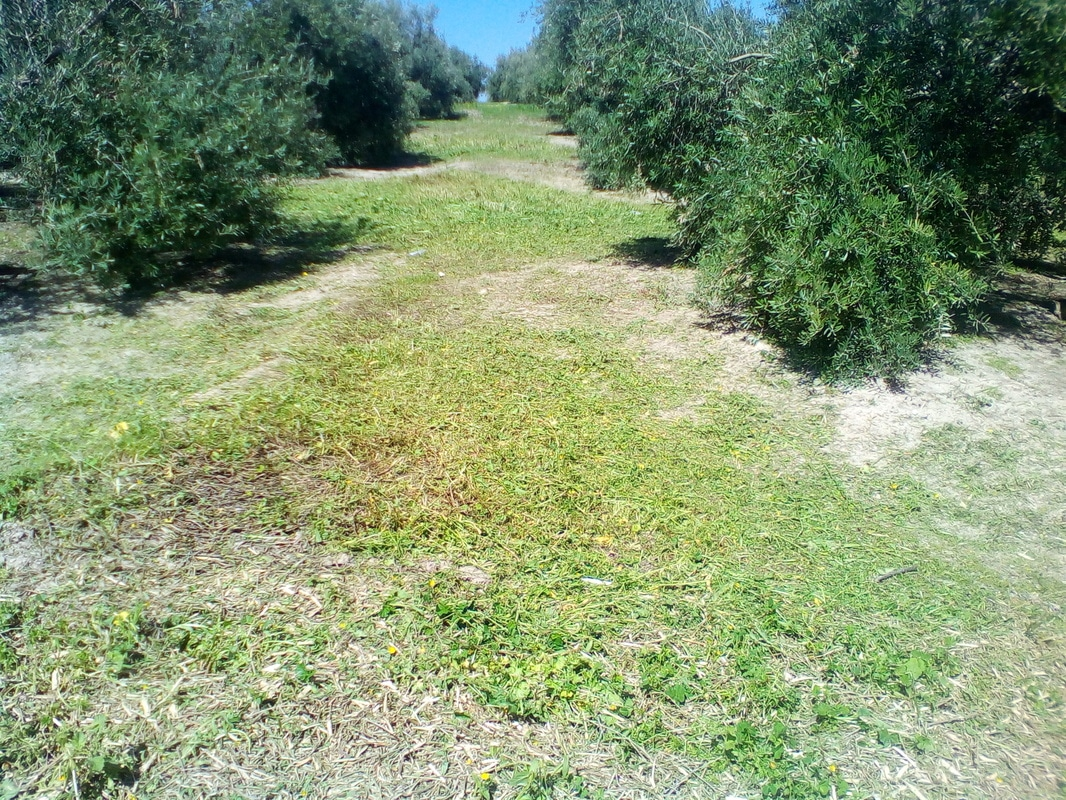 ¿Cómo incrementar el contenido en materia orgánica del suelo? IMG_20170318_125852