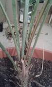 Pomoc při zařazení rostliny 20161206_222503