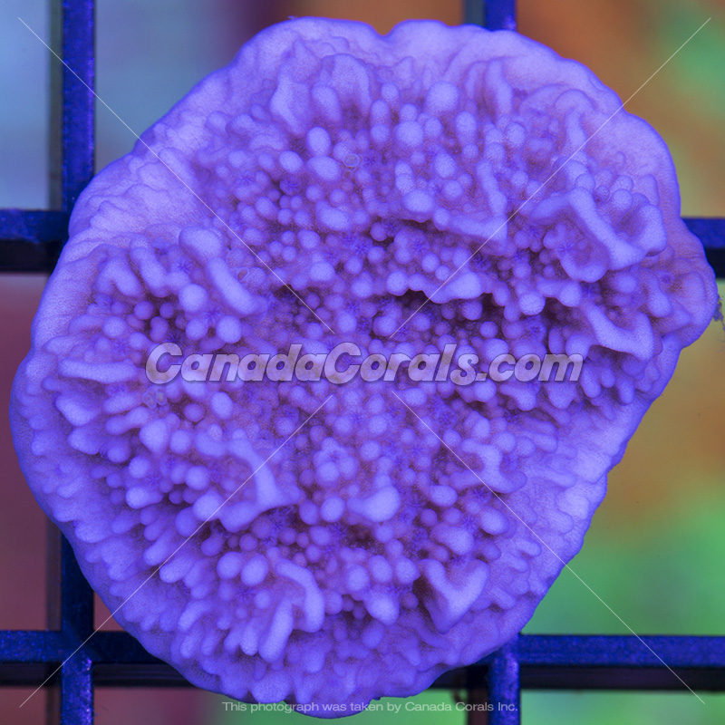 Coral In Stock  (April, 11 2014) IMG_0154