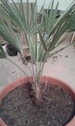 Pomoc při zařazení rostliny 20161206_222514