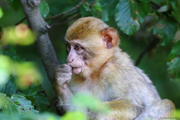 Majmuni - Page 4 M8b587ykmhm