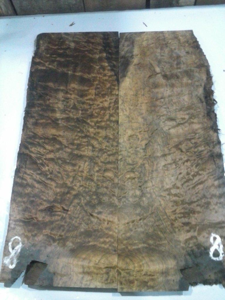 Ledur Escaravelho 6 cordas - Escolha da marcação em Abalone CAM00846