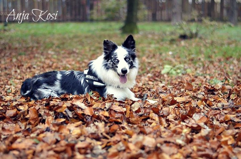 Border Collie - Page 3 1146483_972554586091908_4050201526460915436_n