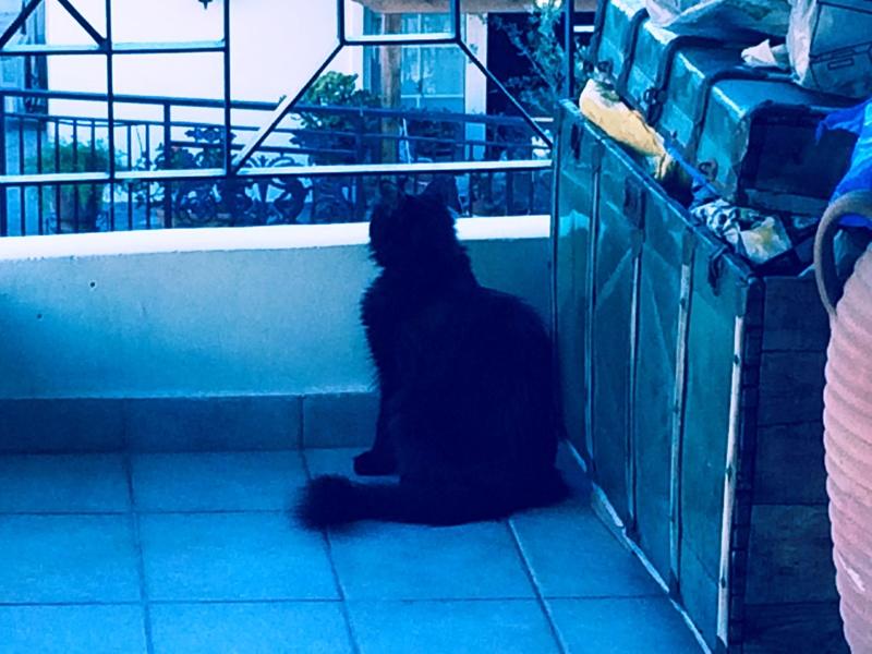 Κάρι, μια υπέροχη γατούλα και τα 4 μωράκια της - Σελίδα 9 Kira_2
