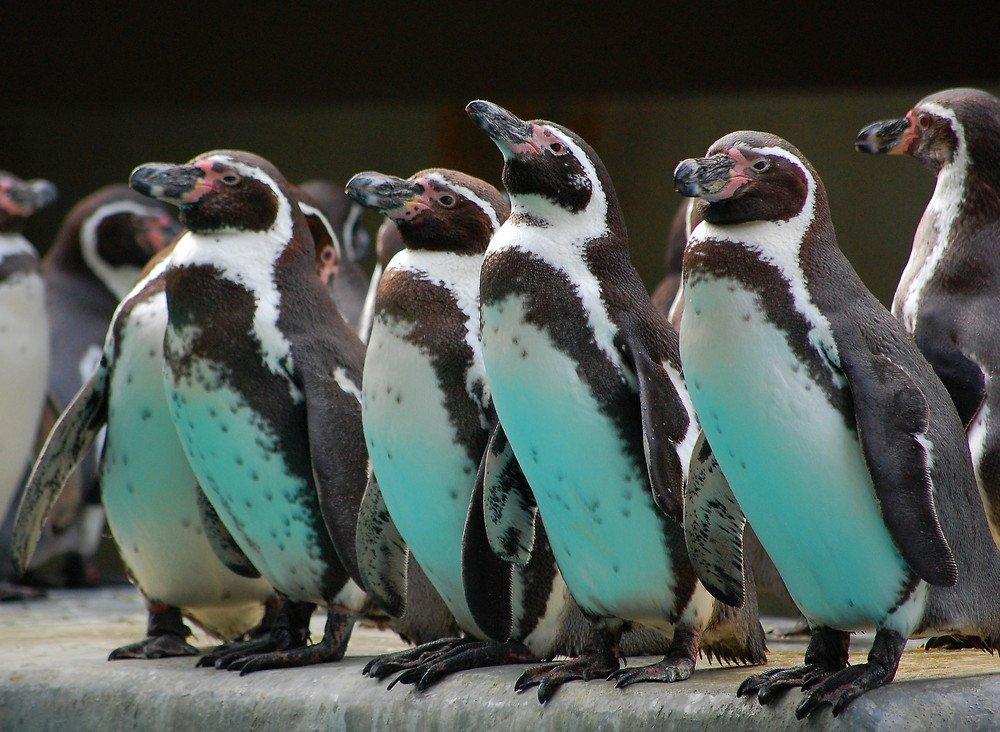 Pingvini - Page 3 9kz1wl35nas
