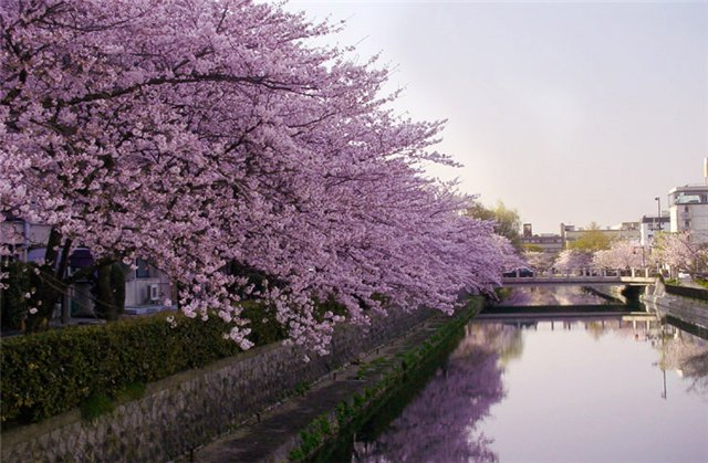 Красивые пейзажы Японии 1cbae8652d3d