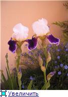 наши домашние цветники - Страница 2 Ecdf65ac8690t