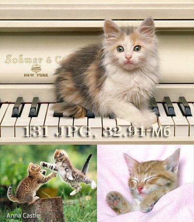 Коты и кошки 961adc8122b3