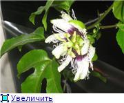 что я вырастила из семян - Страница 2 6306074ef53ct