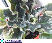 Геснеривые (фиалки, глоксинии, стрептокарпусы, и.т.д.)  - Страница 2 D0400041b64dt