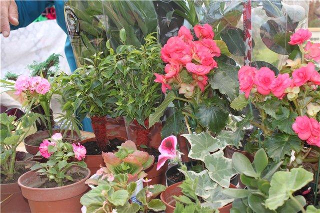 Фестиваль цветов в Алматы - «Алматы – гул кала» 9b836991fdc5