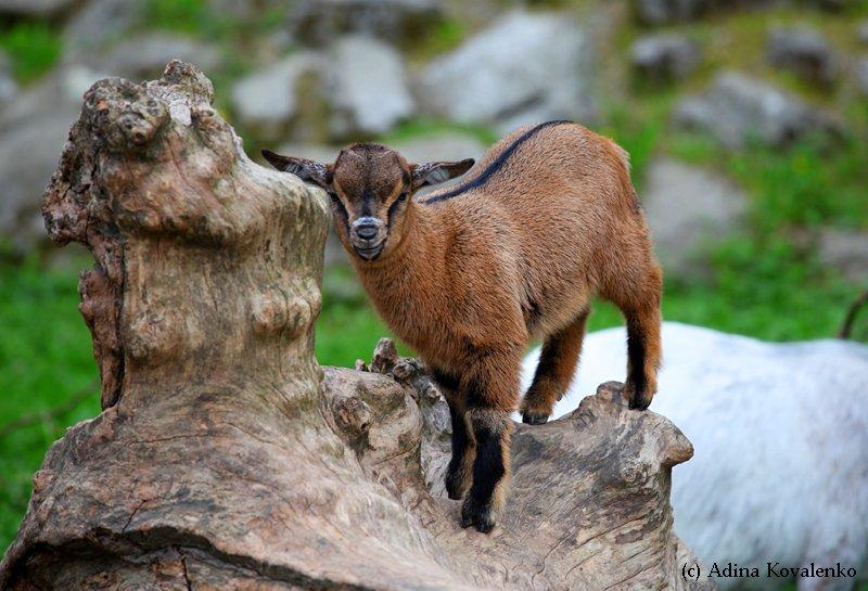 Швейцарский зоопарк - Страница 2 D08622aeb3b1