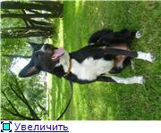 Чара - потрясающая собака! Ищет лучших хозяев! 956dd7db4c33t