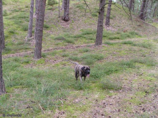 Наши собаки, друзья и гости, кот Мензурка E14336c2a630