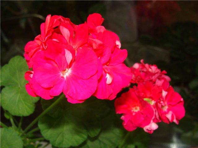 Весеннее  цветение (Хваст от Веры) - Страница 8 62236fd61800