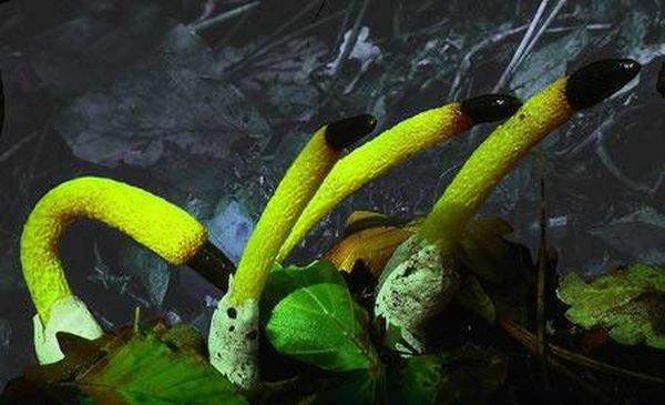 Уникальные растения мира. - Страница 3 1c0fba4734bc