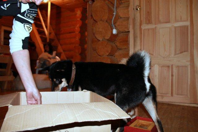 Недельные курсы повышения квалификации для собакообожак :-) Приглашаем всех!!! - Страница 3 898e383f44c6