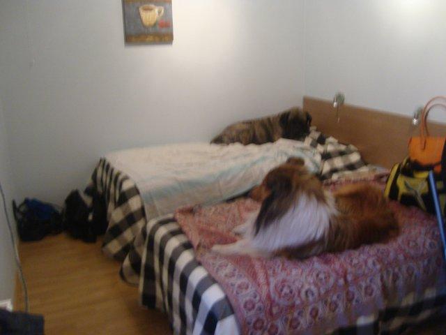 Собаки Татьяны Моисеенковой, кот Мензурка D6ceafe6ff37