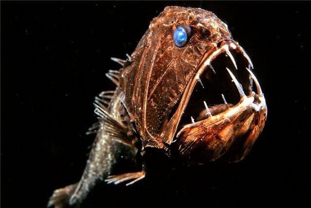 Этот удивительный подводный мир Dadb2e44ab94