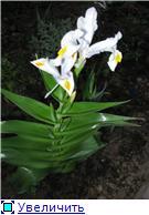 Весенне цветущие 5d53c996656dt