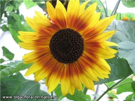 Однолетние растения D463851b293d
