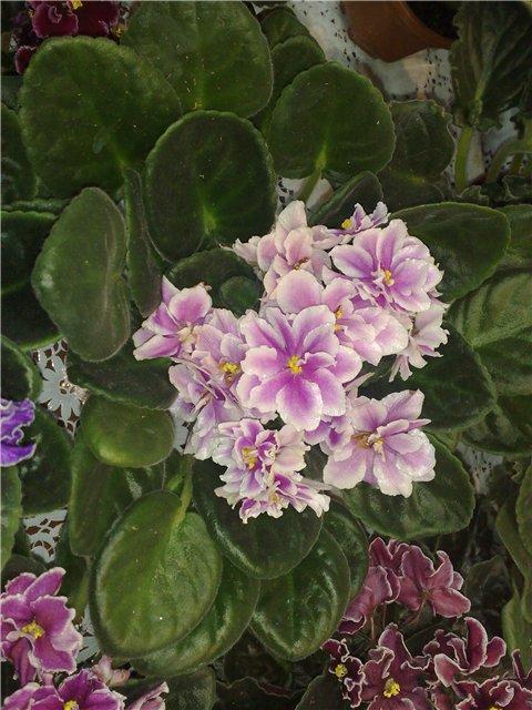 «Цветы.Ландшафт и Приусадебное хозяйство Весна - 2010» 49fbe6ebf551