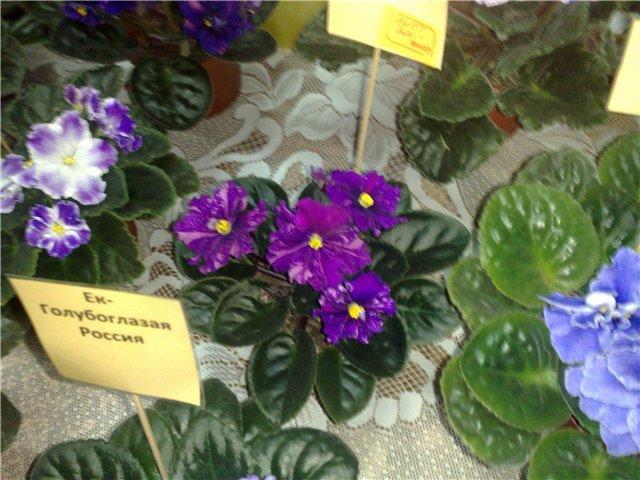 «Цветы.Ландшафт и Приусадебное хозяйство Весна - 2010» Ff27a65c0ac8