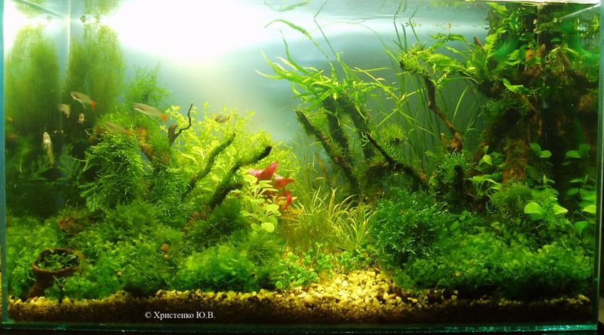 """Как родился аквариум """"Луч света"""" Da1fee67cfb9"""