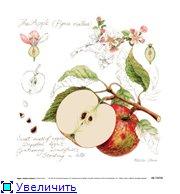 Фрукты, овощи, напитки, натюрморты Fec417df895dt