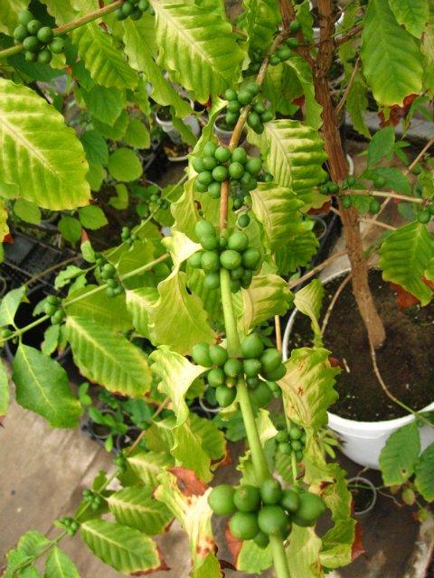 Растения из Нижегородской оранжереи 51ad11d6d6d1