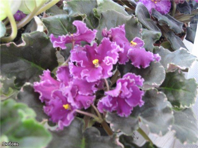 Мои цветики-семицветики - Страница 9 D82a03f57f0d