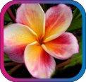 продам семена экзотических растений - Страница 3 7b9c8039a7d5