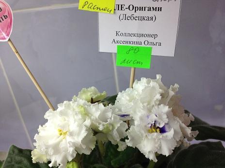 Выставка цветов - Страница 2 F1cd6cdc4ee8