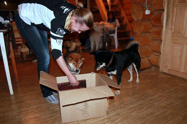 Недельные курсы повышения квалификации для собакообожак :-) Приглашаем всех!!! - Страница 3 07eb9c42b567