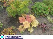 Cад Людмилы Ивановой из черкасс 836745c32124t