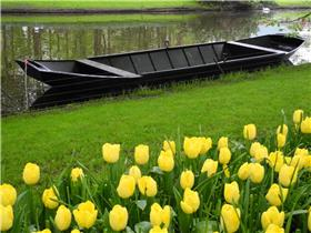 Рай тюльпанов или Кёкнхов - 2012 B808b310e455t