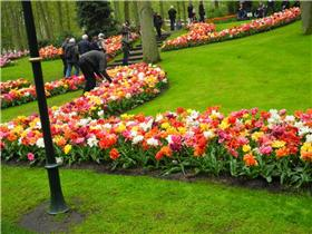 Рай тюльпанов или Кёкнхов - 2012 Abadd1bb51e3t
