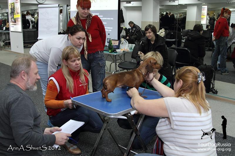 Семинар-практикум по анатомии и движениям собак с Джерардом О'Ши  37217dc8fa0d